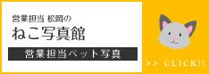 営業担当松岡のねこ写真館